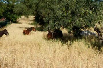 Pferdegruppe im hohen Gras unter Baum