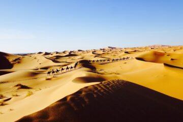 Karawane in der Sahara