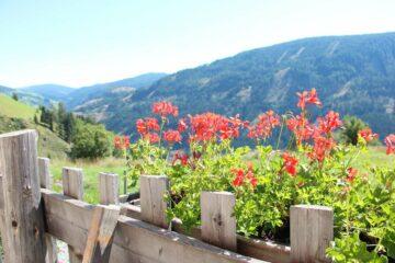 Blick durch rote Blumen auf den Berg gegenüber