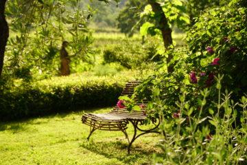 Stuhl neben Rosenstrauch mit pinken Blüten