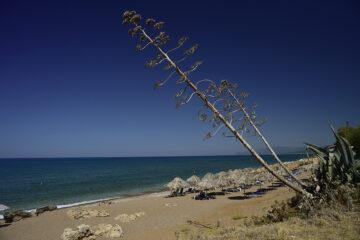 Strand mit Palmenschirmen und Meer