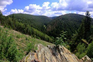 Grüne Wälder auf Berghügeln