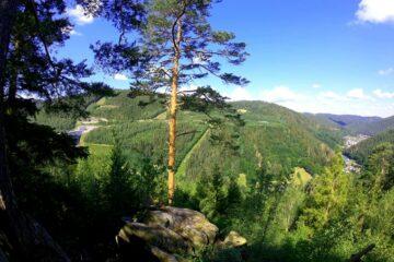 Baum auf Stein mit Blick über grüne Waldhügel