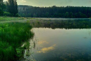 See mit grünen Wassergräsern umgeben von Bäumen