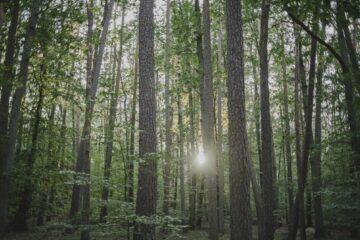 Sonne bricht durch die Bäume