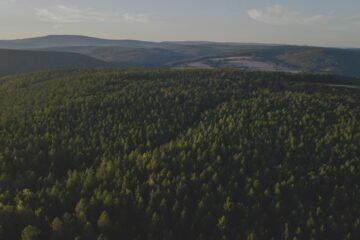 Blick über Waldlandschaft