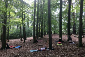 Yoga mit Bäumen