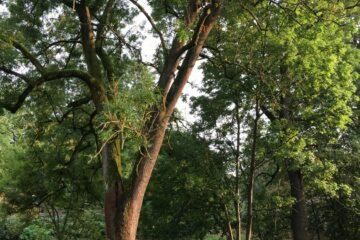 Liegestühle unter Bäumen