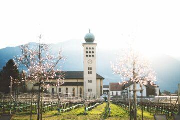 Kirche und Weinreben im Frühling