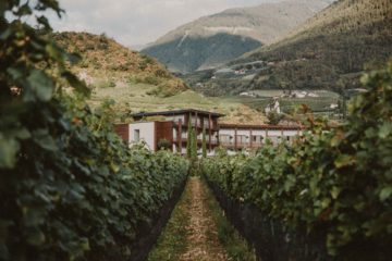 Haus inmitten von Weinreben