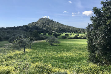 Grüner Hügel und Wiese