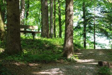 Wald mit Bank zwischen Bäumen