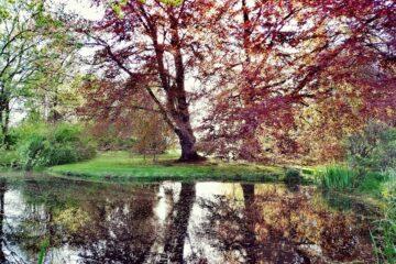 Roter Ahorn spiegelt sich im Wasser