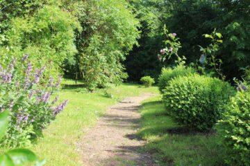 Pfad durch Garten